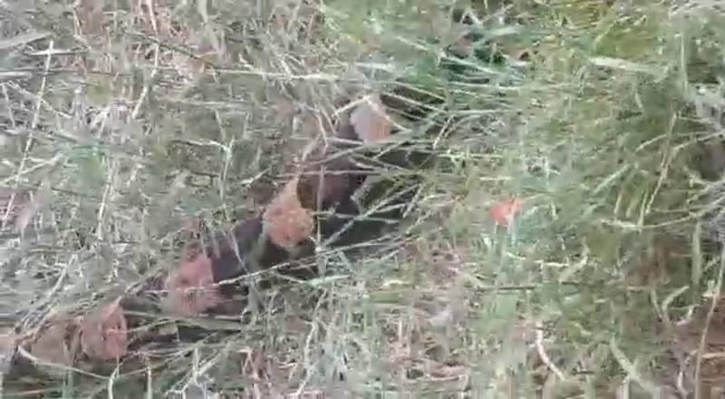Горожане обнаружили огромную змею у Космопарка