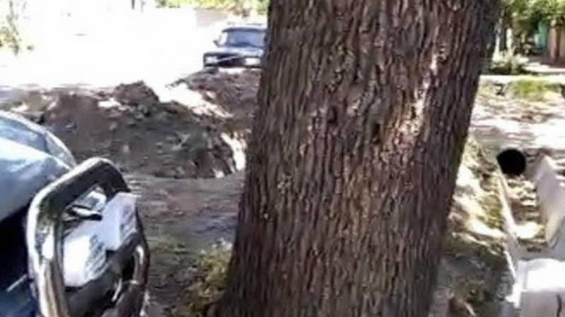На улице Логвиненко сотрудниками «Зеленхоза» будет произведена обрезка дерева
