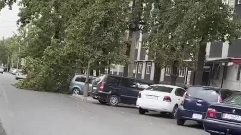 На ул.Турусбекова дерево упало на машину. Фото