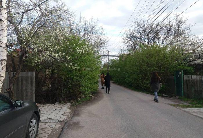В Бишкеке проезжая часть ул.Айдаралиева закрыта кустарниками. Пешеходы и машины еле передвигаются
