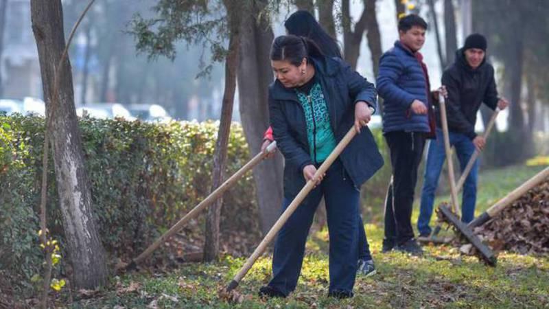 Мэрия прокомментировала предложение бишкекчанина о том, чтобы убирать опавшие листья весной, а не осенью