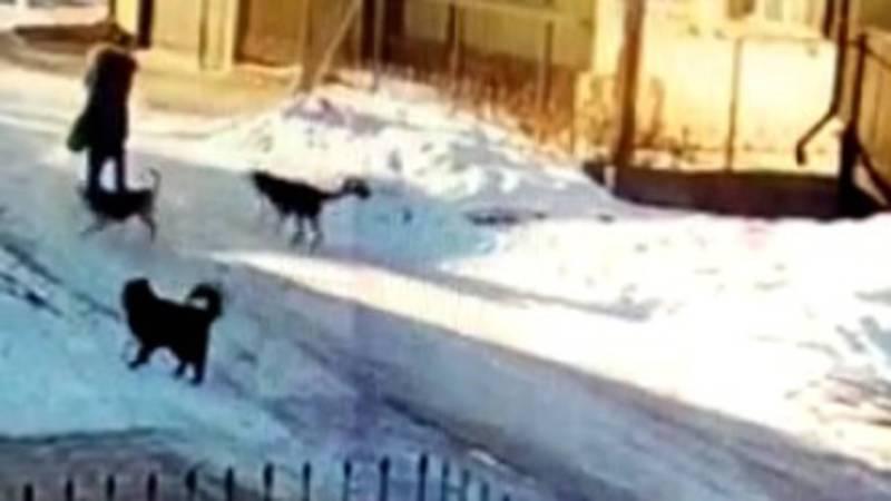 На ул.Сыдыкбекова в Караколе бездомные собаки нападают на людей, - житель