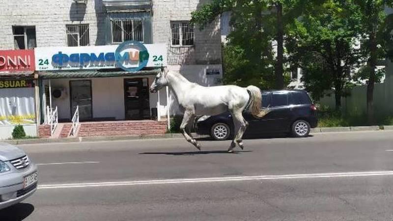 Посередине дороги на ул.Ахунбаева бегает лошадь. Видео очевидца