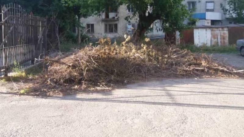 Во дворе дома №62 по улице Тыныстанова сухие ветки убраны, - мэрия
