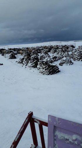 Снег в долине Аксай