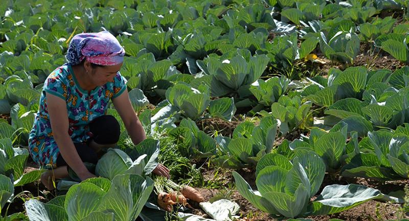 Цены на основные сельхозтовары останутся на низком уровне в течение 10 лет, - ФАО