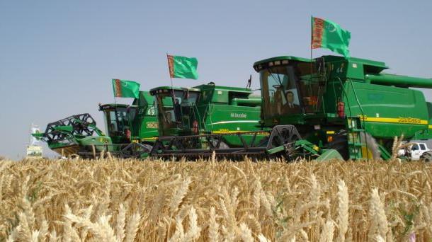 В Туркменистане завершилась уборка пшеницы