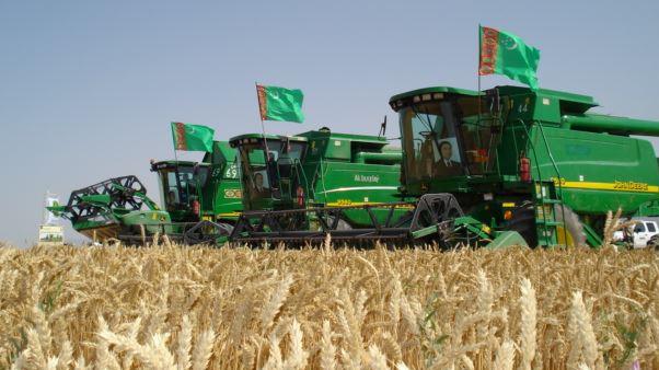 В Туркменистане готовятся к уборке пшеницы